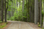 Country Road through Conifer Forest, Acadia National Park, Seal Cove, Tremont, ME