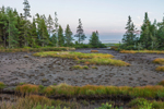 Saltwater Marsh and Mud Flats at Low Tide at Lopaus Point, Village of Bernard, Tremont, ME