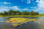 Salt Marsh and Tidal Pool at Majors Harbor and Mashomack Preserve, Shelter Island, NY