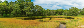 Salt Marsh and Tidal Pool at Mashomack Preserve off Majors Harbor, Shelter Island, NY
