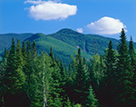 White Mountains and Conifers