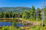 Lily Pond off Kancamagus Scenic Byway, White Mountain National Forest, Livermore, NH