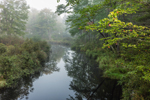 Priest Brook in Early Morning Fog, Birch Hill Recreation and Wildlife Management Area, Winchendon, MA