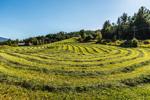 Freshly Cut Hay on Vermont Farmland, Cambridge, VT