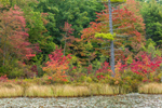 Early Fall Colors along Shoreline of Lake Rohunta, New Salem, MA