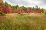Early Fall Colors in Wetlands along Whites Mill Pond, Winchendon, MA