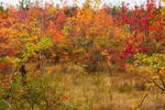 Freshwater Marsh and Shrub Swamp near Little Pond in Early Autumn, Royalston, MA