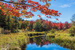 Kemp Brook in Early Autumn, Fitzwilliam, NH