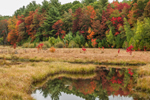 Wetlands in Early Autumn along Tully Brook, Richmond, NH