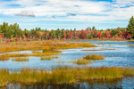 Freshwater Marsh at Rye Pond in Early Autumn, Antrim, NH