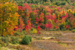 Freshwater Marsh and Forests in Early Autumn, Stoddard, NH