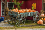 Pumpkins in Old Wooden Wagon at Pete's Greens Farm Market, Waterbury Center, Waterbury, VT