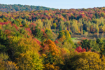 Fall Foliage on Forested Hillside, Fairfield, VT