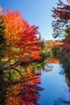 Colorful Fall Foliage along Black Brook, Andover, ME