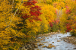 Swift River in Fall, Rangeley Lakes Region, Byron, ME