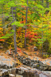 Rocks and Forests along Swift River in Fall, Byron, ME