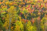 Mountainside of Fall Foliage, Rangeley Lakes Region, Dallas Plantation, ME