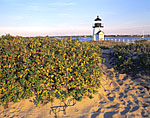 Brant Point Light and Rosehips