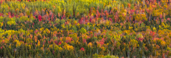 Mountainside of Color in Fall, View from Quill Hill Scenic Drive Overlook, Rangeley Lakes Region, Dallas Plantation, ME