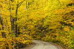 Fall Foliage along Country Road near Ten Degree in Bemis Valley, Rangeley Lakes Region, Township D, ME