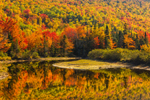 Colorful Foliage on Spruce Mountain with Reflections in Bemis Stream, Rangeley Lakes Region, Rangeley Plantation, ME