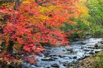 Fall Foliage along East Brook, Weld Corner, Weld, ME