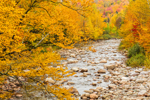 Foliage along Swift River in Fall, Rangeley Lakes National Scenic Byway, Rangeley Lakes Region, Byron, ME