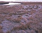 Salt Marsh in Heavy Frost, Mill Creek, Cape Cod
