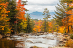 Colorful Foliage along Wildcat Brook at Jackson Falls in Autumn, Moat Mountains in Distance, White Mountains Region, Jackson, NH