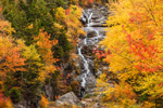 Brilliant Fall Foliage along Silver Cacade, Crawford Notch State Park, White Mountains Region, Harts Location, NH