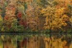 Colorful Fall Foliage along Shoreline of Wononpakook Lake (aka Long Pond), Mary V. Peters Memorial Park, Salisbury, CT