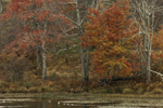Colorful Foliage on Miles Pond at Emily Winthrop Miles Wildlife Sanctuary, Sharon, CT
