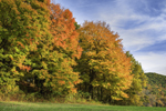 Sunlight Shines on Colorful Fall Foliage of Sugar Maple Trees at Edge of Field, South Kent, CT