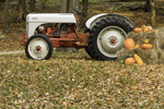 Antique Ford Tractor with Pumpkins and Hay Bales, South Kent, CT