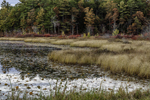 Grasses along Shoreline of Lake Rohunta in Fall, New Salem, MA