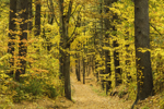 Colorful Foliage along Woodland Road at Wachusett Reservoir in Fall, West Boylston, MA