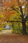 Sugar Maple Trees and Old Stone Church Historic Site (Built 1891) at Wachusett Reservoir in Autumn, West Boylston, MA