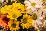 Bouquet of Colorful Daisies, Athol, MA