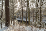Winter Morning along the Millers River after Snowfall, Bearsden Conservation Area,  Athol, MA