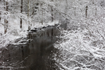 West Branch Tully River after Snowstorm, Orange, MA