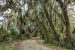 Country Road through Live Oak Trees Draped with Spanish Moss, Laurel Hill Wildlife Drive in Savannah National Wildlife Refuge, Hardeeville, SC