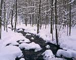 Unadilla Brook and Hardwoods in Winter Snow