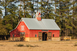 Late Afternoon Light on Red Barn with Cupola near Eagle Neck, South Newport, GA