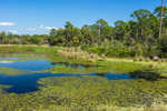 Headquarters Pond and Forests at St. Marks National Wildlife Refuge, Gulf Coast, Florida Panhandle,  Wakulla County, St. Marks, FL