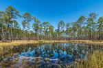 Reflection Pond, Ochlockonee River State Park, Wakulla County, Sopchoppy, FL
