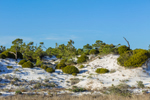 Dunes in St. George Island State Park, Gulf Coast, Florida Panhandle, Franklin County, St. George Island, FL