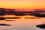 Predawn at Mounds Pool, St. Marks National Wildlife Refuge, Gulf Coast, Florida Panhandle, Wakulla County, FL