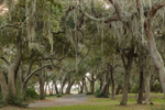 Trail through Live Oak Trees Draped with Spanish Moss in Evening Light, Jekyll Island, GA