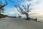 Old Snags on Driftwood Beach in Early Morning, Jekyll Island, GA
