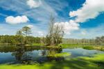 Bluebill Pond in Spring at Harris Neck National Wildlife Refuge, South Newport, GA